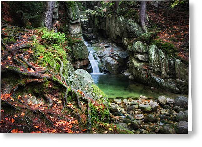 Waterfall In Enchanted Forest Greeting Card by Artur Bogacki