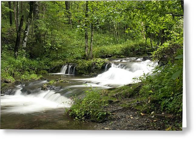 Waterfall Oasis Greeting Card by Tina B Hamilton