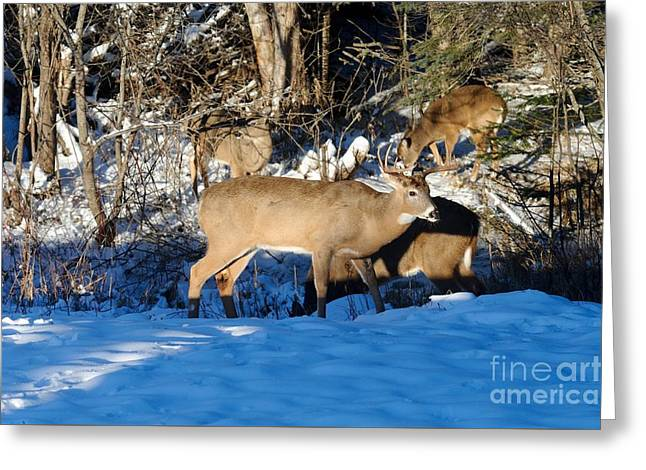 Waterhole Gathering Greeting Card by Sandra Updyke