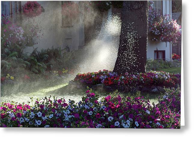 Watering The Lawn Greeting Card by Keith Boone