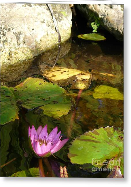 Waterlilies 2 Greeting Card by Donna McLarty