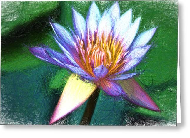 Waterlily Sketch Greeting Card