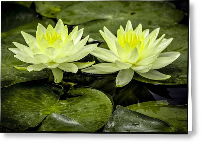 Waterlily Duet Greeting Card