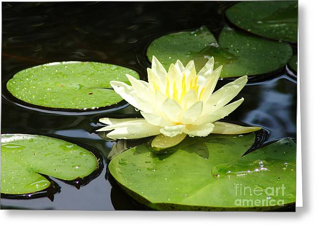 Waterlily In Yellow Greeting Card by Tonya Laker