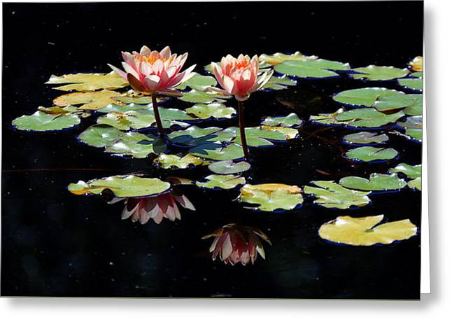 Greeting Card featuring the painting Waterlily Panorama by Marilyn Smith