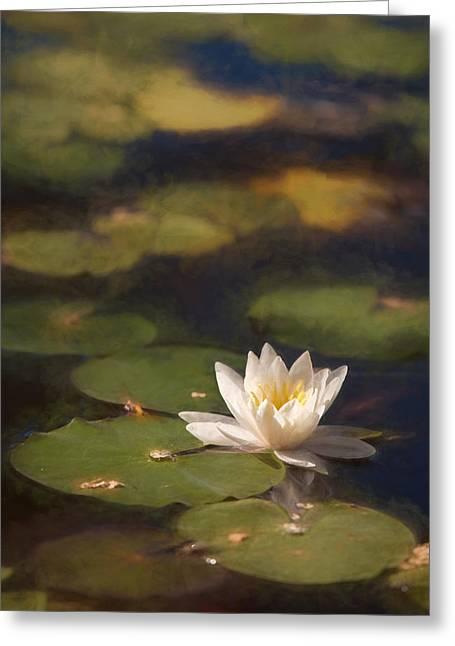 Waterlily Greeting Card by Sheri Van Wert
