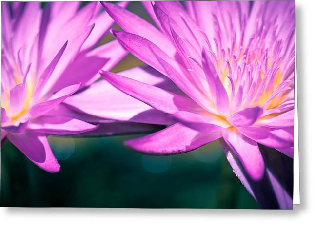 Waterlily Twins Greeting Card