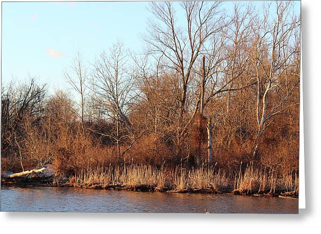 Northeast River Banks Greeting Card