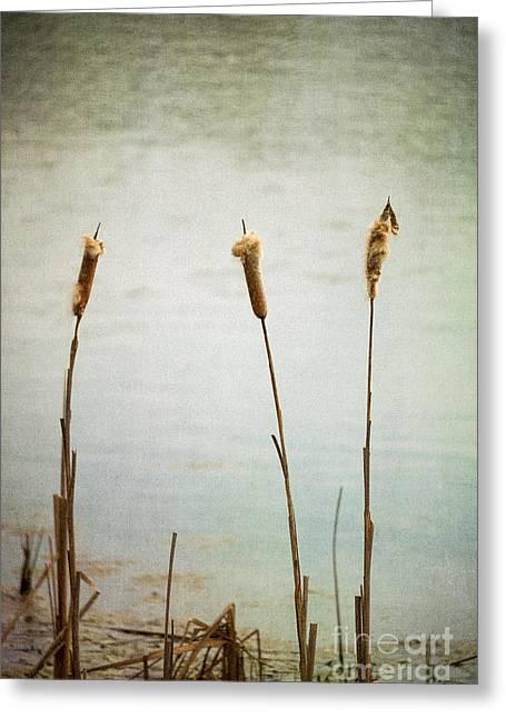 Water's Edge No. 2 Greeting Card