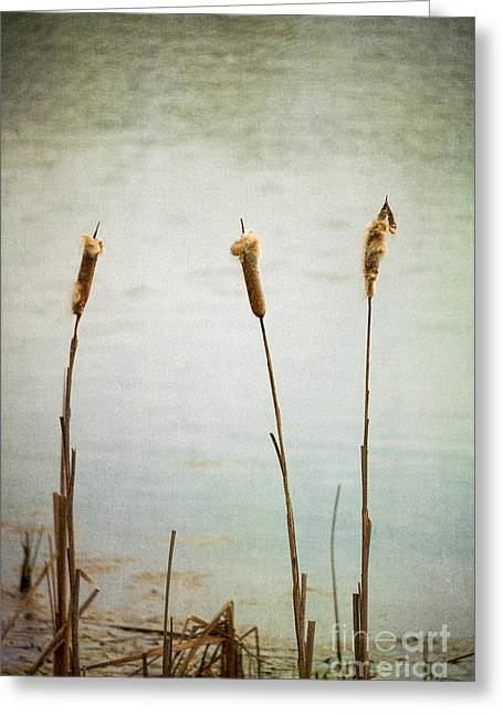 Water's Edge No. 2 Greeting Card