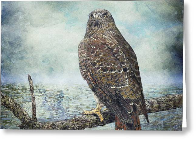 Water's Edge - Red Tailed Hawk Greeting Card