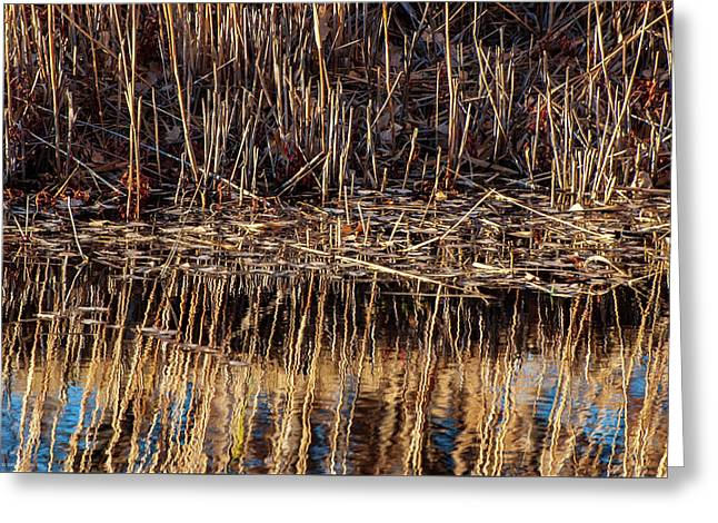 Water's Edge Reflection Greeting Card