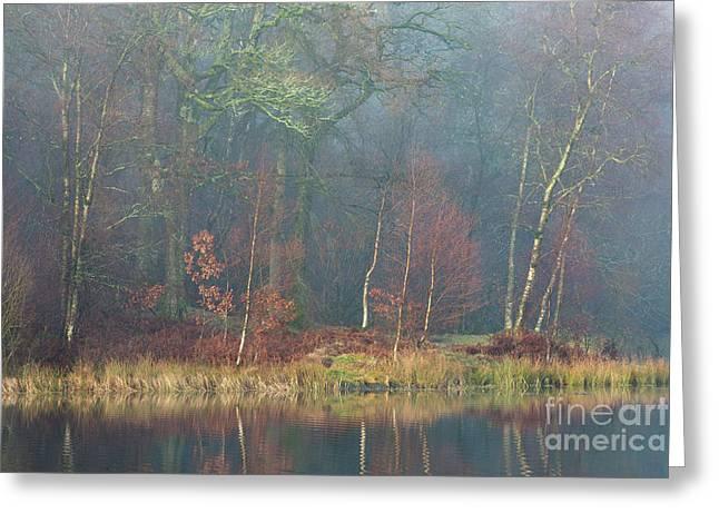 Waters Edge Yew Tree Tarn Greeting Card by Tony Higginson