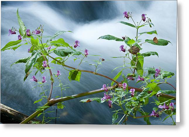 Waterscapes - Lilac Blossom Greeting Card by Andy-Kim Moeller