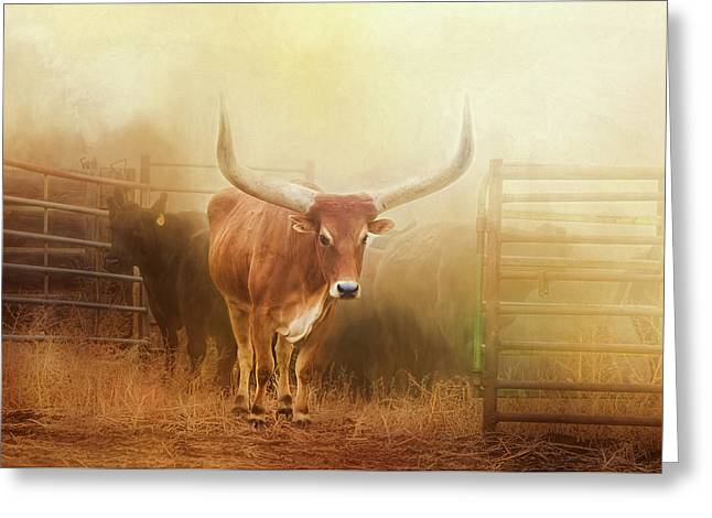 Watusi In The Dust And Golden Light Greeting Card