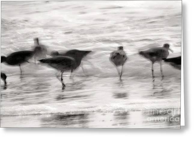 Plundering Plover Series In Black And White 3 Greeting Card by Angela Rath
