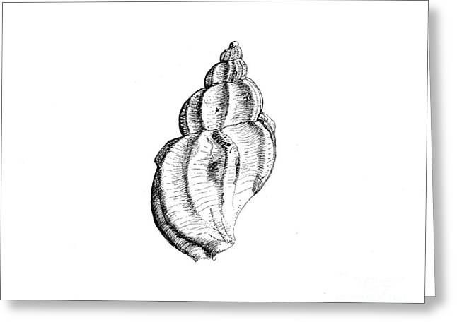 Waved Whelk Greeting Card by Jeff Greiner