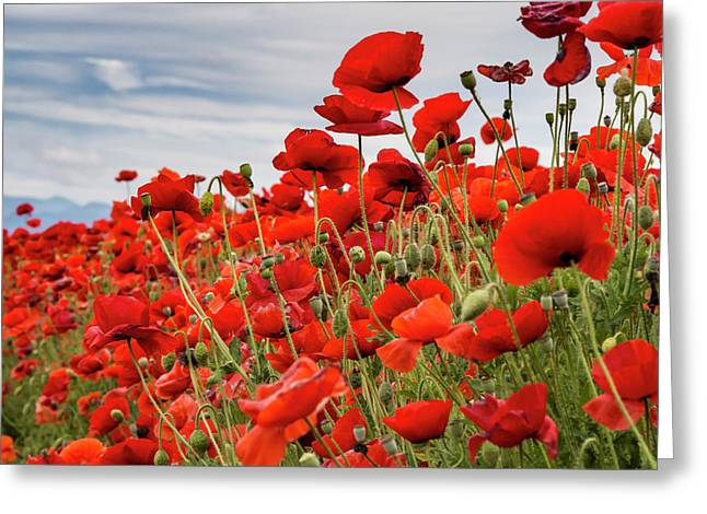 Waving Red Poppies Greeting Card