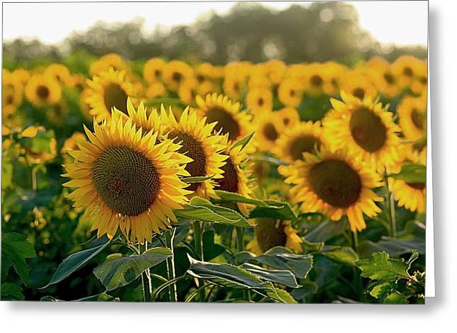 Waving Sunflowers In A Field Greeting Card by Karen McKenzie McAdoo