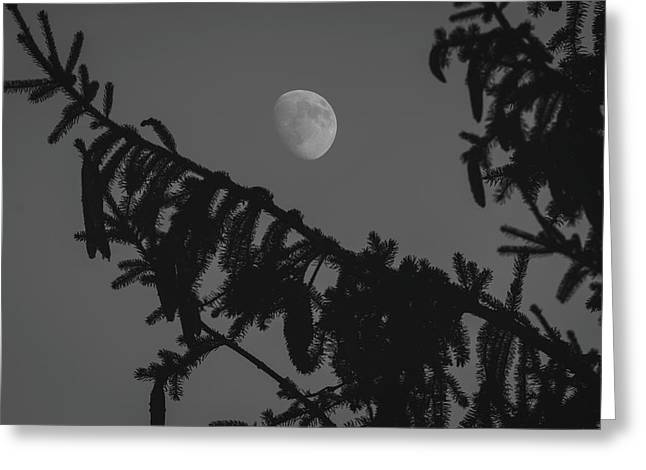 Waxing Gibbous Through The Evergreens Greeting Card
