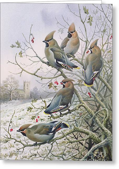 Waxwings Greeting Card by Carl Donner