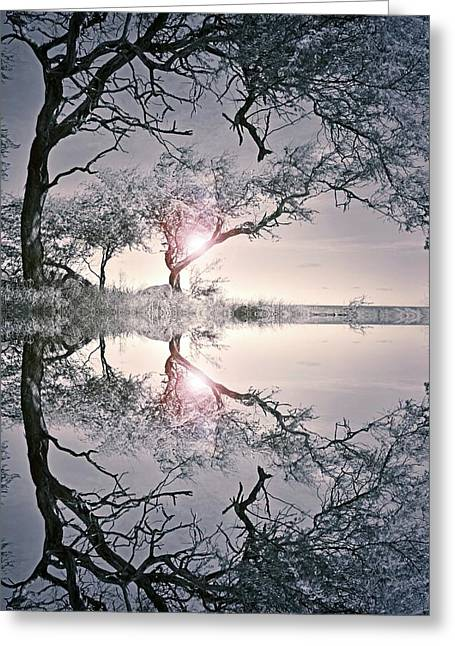 Greeting Card featuring the photograph We Are In This Together by Tara Turner