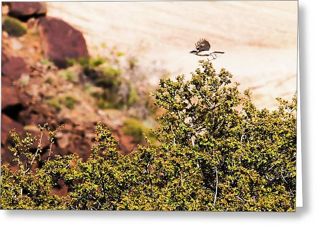 Greeting Card featuring the photograph We Have Takeoff by Onyonet  Photo Studios