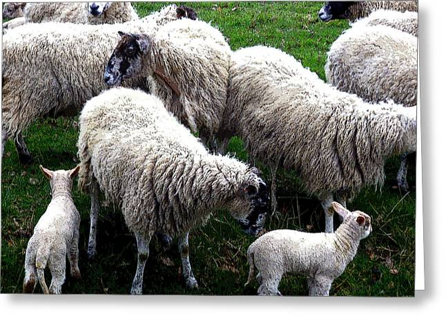 We Like Sheep Greeting Card by Mindy Newman