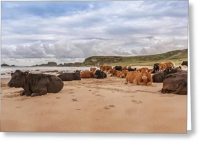 We Moo Like To Be Beside The Seaside Greeting Card by Roy McPeak