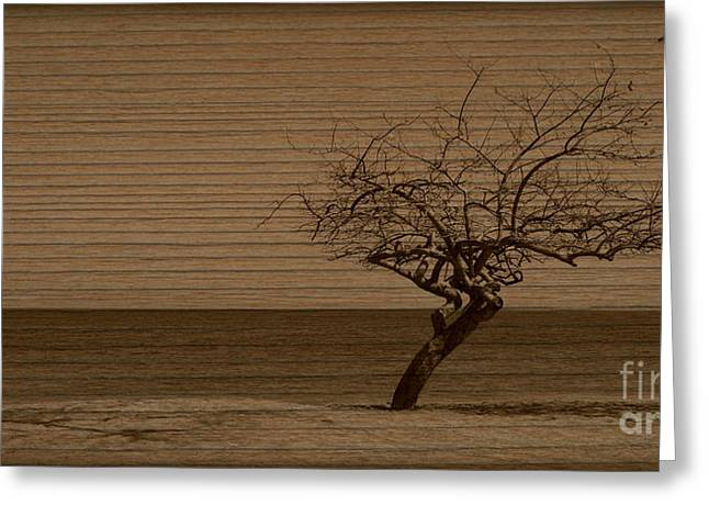Weatherd Beach Tree Greeting Card by Perry Webster