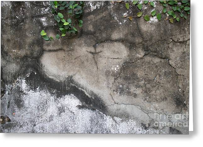 Weathered Broken Concrete Wall With Vines Greeting Card by Jason Rosette