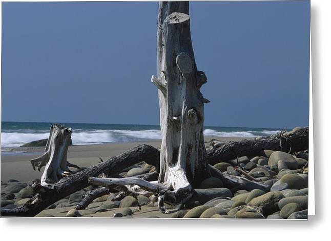 Weathered - Seaside Wilderness Park Greeting Card by Soli Deo Gloria Wilderness And Wildlife Photography