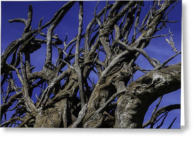 Weathered Tree Roots Greeting Card by Garry Gay