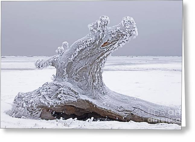 Weathered Tree Trunk In Winter Greeting Card by Tim Grams