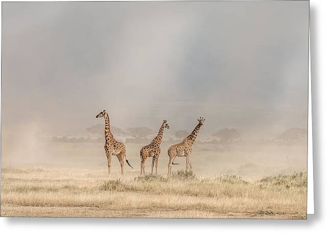 Weathering The Amboseli Dust Devils Greeting Card by Jeffrey C. Sink