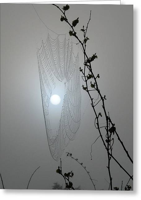 Greeting Card featuring the photograph Web Glow by Peg Urban