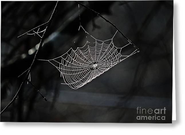 Web Of Lies  Greeting Card by JW Hanley