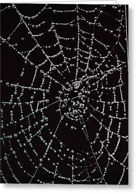 Web Of Pearls Greeting Card by Rebecca Fitzgerald