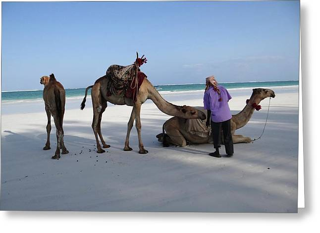 Wedding Camels In The Waiting ... Greeting Card