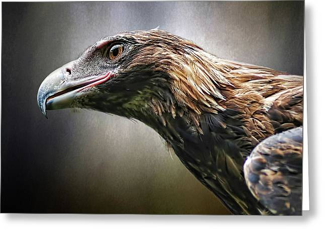 Wedge-tailed Eagle Portrait By Kaye Menner Greeting Card