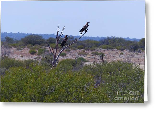 Wedge-tailed Eagles Greeting Card