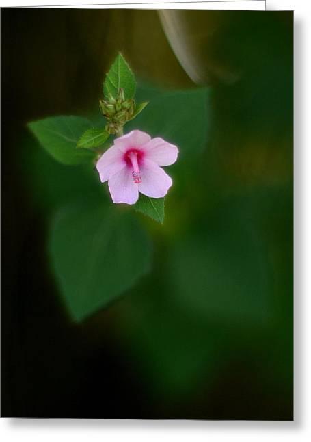 Weed Flower 907 Greeting Card