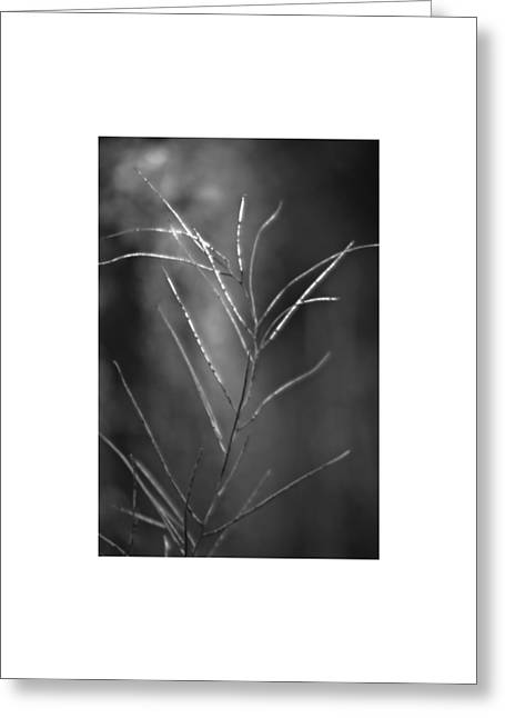 Greeting Card featuring the photograph Weeds 1 by Catherine Sobredo