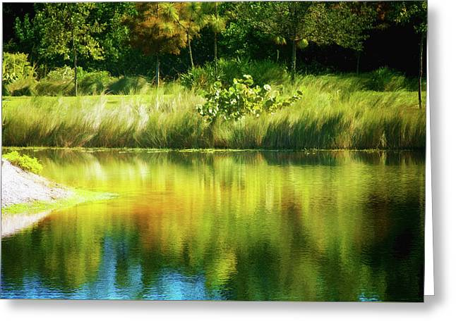 Weeds And Water Greeting Card by Terry Davis