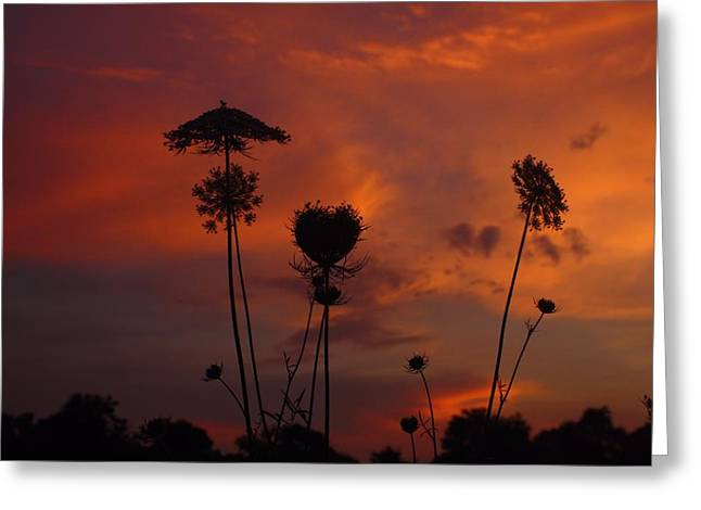 Weeds In The Sunrise Greeting Card by Kathryn Meyer