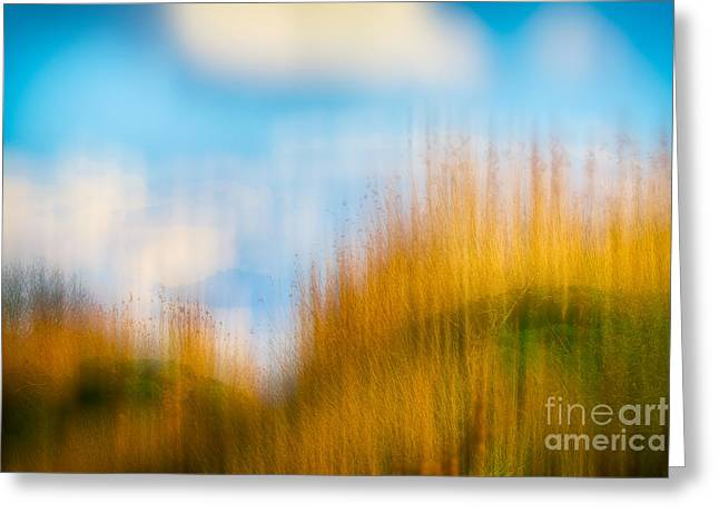 Weeds Under A Soft Blue Sky Greeting Card