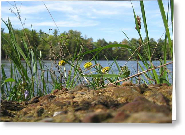 Weeds With A View Greeting Card by Shelia Howe