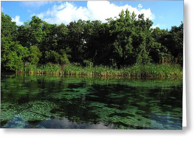 Greeting Card featuring the photograph Weeki Wachee River by Barbara Bowen
