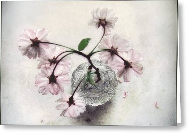 Greeting Card featuring the photograph Weeping Cherry Blossoms Still Life by Louise Kumpf