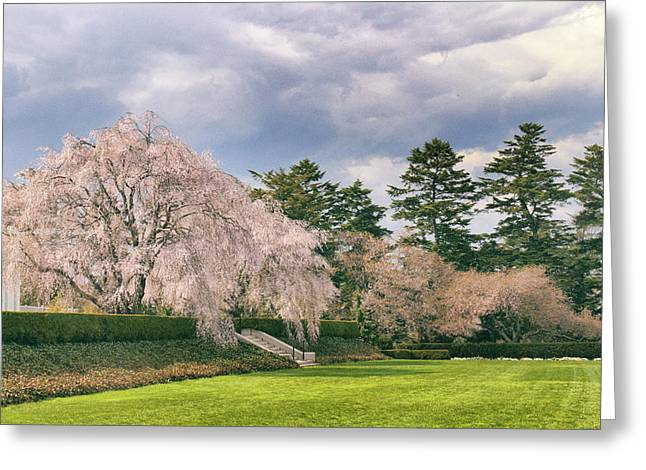 Weeping Cherry In Bloom Greeting Card by Jessica Jenney
